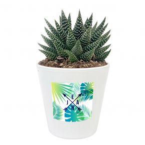 Succulente Haworthia personnalisable avec design Copacabana