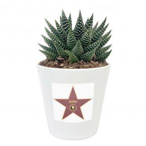 Haworthia plante grasse avec motif Hollywood