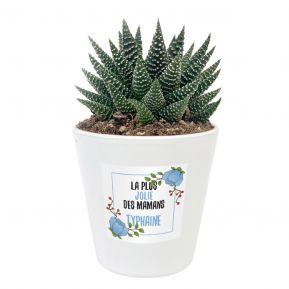 Plante grasse Haworthia avec étiquette végétale