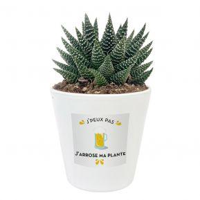 Plante grasse en pot à personnaliser J'peux pas